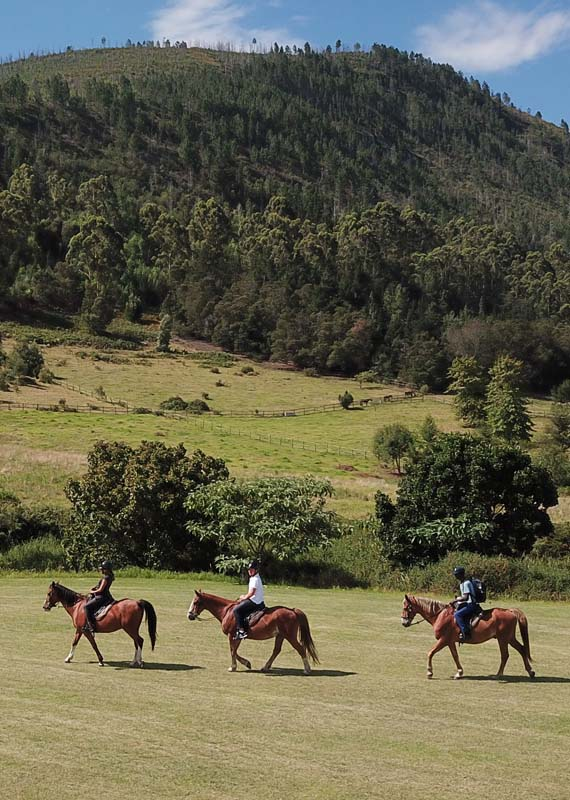 Mountain view and forest horse ride
