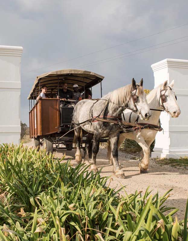 Horse carriage tours in Plettenberg Bay