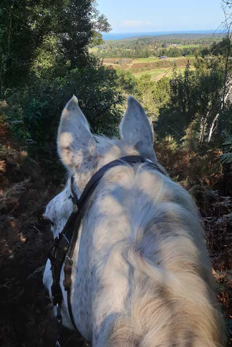 Kurland Park Horse and Carriage Trails